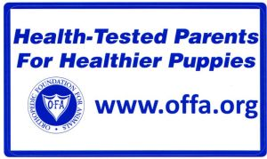 health tested Lab puppies